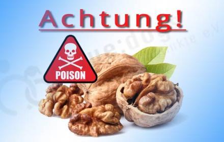Vergiftungsgefahr durch Walnuss