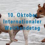 Internationaler Welthundetag